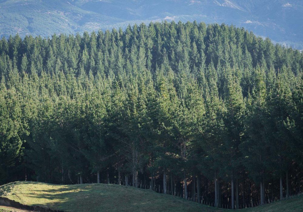 img-fmnz-hero-forestry-block-1920px